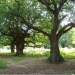 Staverton Park
