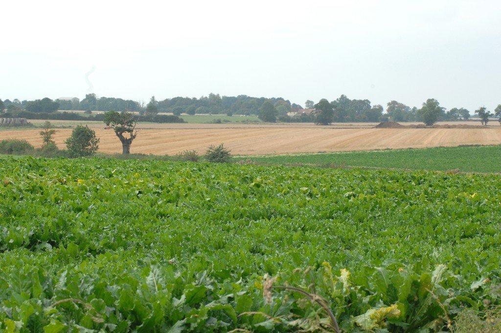 Ancient plateau claylands south of Mellis